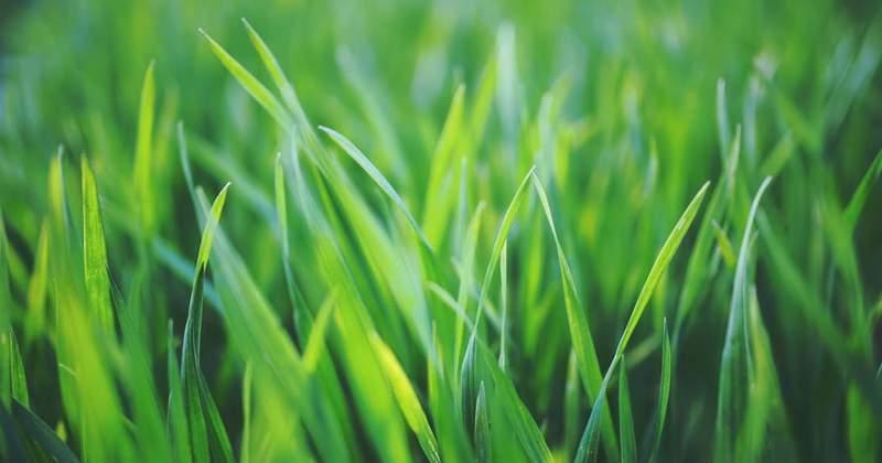 Need a Greener Lawn?
